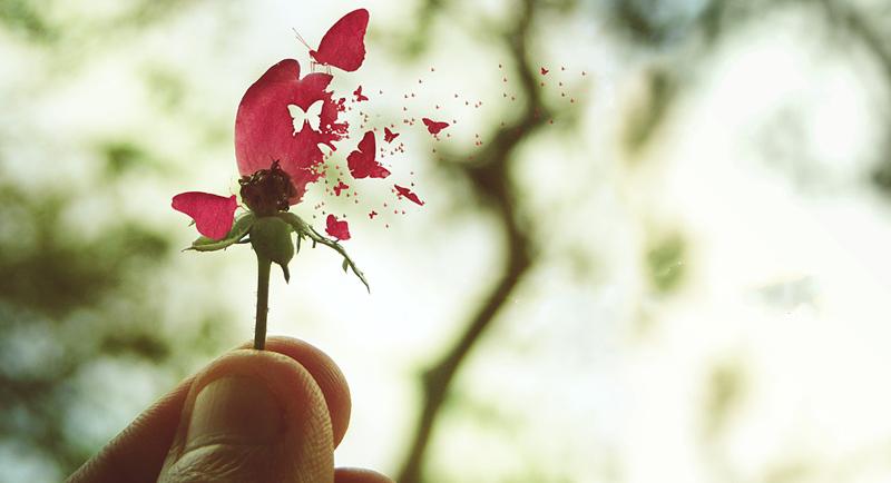 Vida, morte e liderança